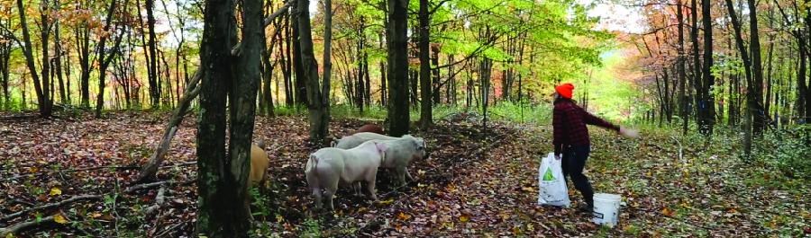 Food Systems, Ch. 2: Dinner on the Farm | Row House Cinema | May 15 |1:40PM